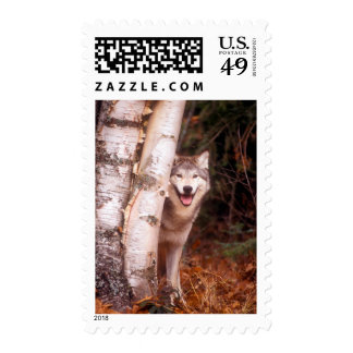 Gray Wolf Behind a Tree Postage