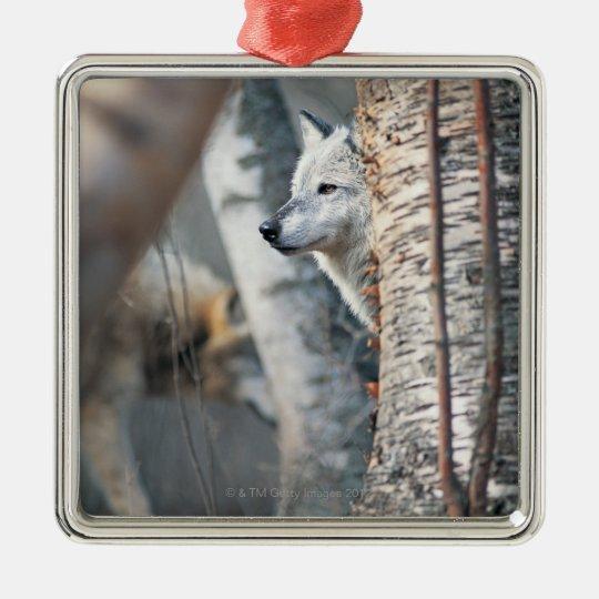 Gray Wolf Behind Tree Metal Ornament