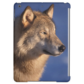 gray wolf, Canis lupus, in the foothills of 2 Cover For iPad Air