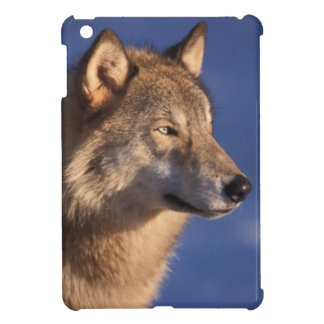 gray wolf, Canis lupus, in the foothills of 2 iPad Mini Case