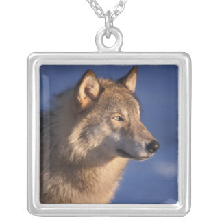 gray wolf, Canis lupus, in the foothills of 2 Silver Plated Necklace