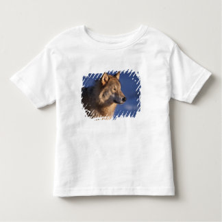 gray wolf, Canis lupus, in the foothills of 2 Toddler T-shirt