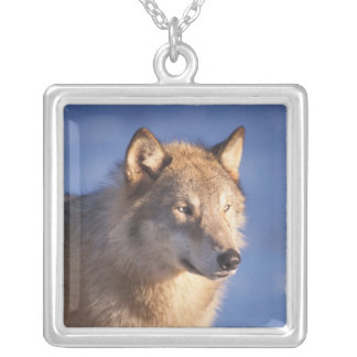gray wolf, Canis lupus, in the foothills of the 2 Silver Plated Necklace