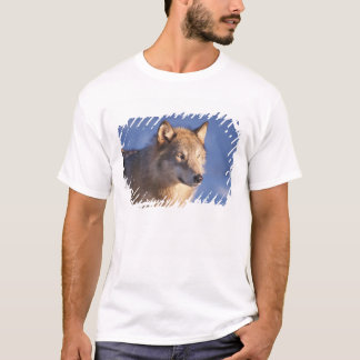 gray wolf, Canis lupus, in the foothills of the 2 T-Shirt