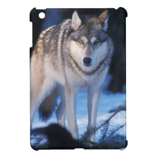 gray wolf, Canis lupus, in the foothills of the 3 Cover For The iPad Mini