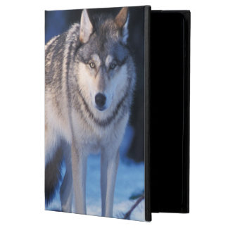 gray wolf, Canis lupus, in the foothills of the 3 iPad Air Covers