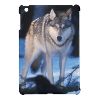 gray wolf, Canis lupus, in the foothills of the 3 iPad Mini Cases