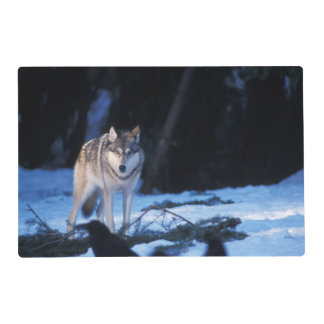 gray wolf, Canis lupus, in the foothills of the 3 Laminated Placemat