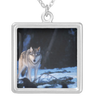 gray wolf, Canis lupus, in the foothills of the 3 Silver Plated Necklace
