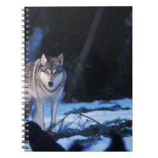 gray wolf, Canis lupus, in the foothills of the 3 Spiral Note Book