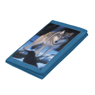 gray wolf, Canis lupus, in the foothills of the 3 Trifold Wallets