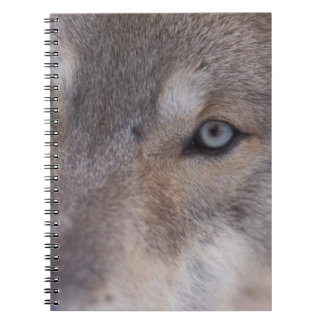 gray wolf, Canis lupus, in the foothills of the Notebooks