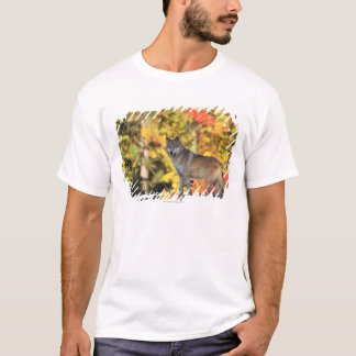 Gray Wolf Canis lupus.order: carnivorafamily T-Shirt