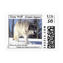 Gray Wolf (Canis lupus) Postage