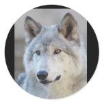 Gray Wolf Closeup Classic Round Sticker