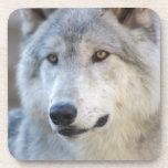Gray Wolf Closeup Drink Coaster
