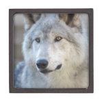 Gray Wolf Closeup Jewelry Box