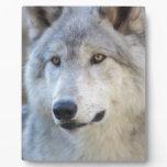 Gray Wolf Closeup Plaque