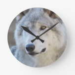 Gray Wolf Closeup Round Clock