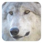 Gray Wolf Closeup Square Sticker