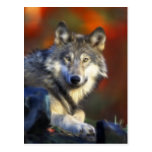 Gray Wolf, Endangered Species Digital Photography Post Card