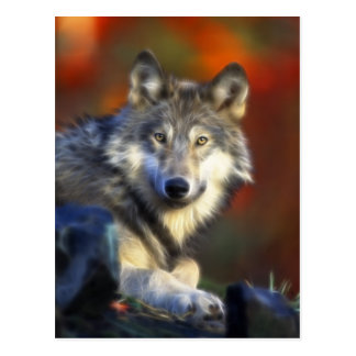 Gray Wolf, Endangered Species Digital Photography Postcard