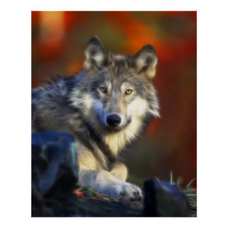 Gray Wolf, Endangered Species Digital Photography Poster