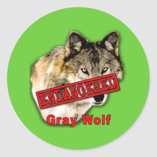Gray Wolf Endangered Species Products Classic Round Sticker