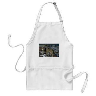 Gray Wolf foraging along icy river Adult Apron