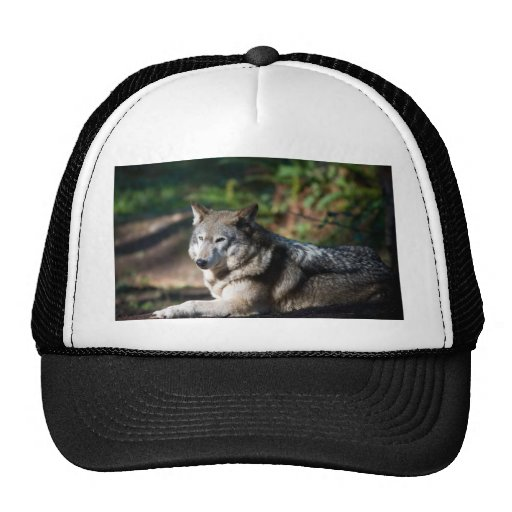 Gray wolf hats