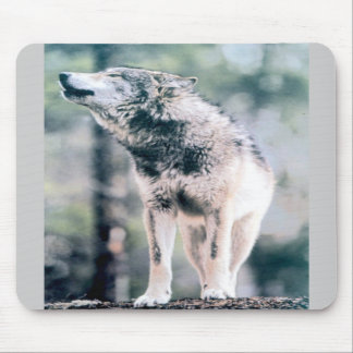 Gray Wolf in Grand Teton National Park Mousepads