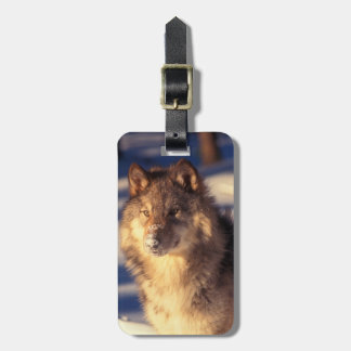 Gray Wolf in Snow Bag Tag