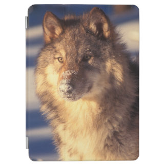 Gray Wolf in Snow iPad Air Cover