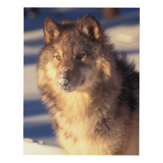 Gray Wolf in Snow Panel Wall Art