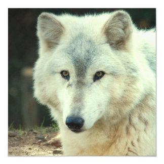 Gray Wolf Invitation