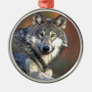Gray Wolf Metal Ornament