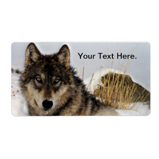 Gray Wolf or Timber Wolf Laying in the Snow Label