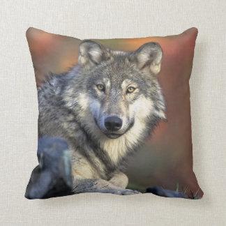 Gray wolf pillows