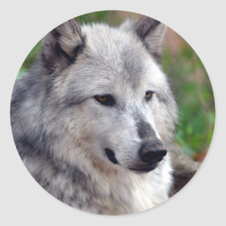 Gray Wolf Pose-168 Round Stickers