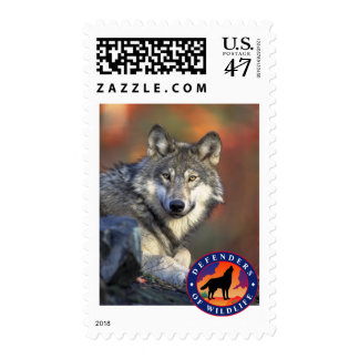 Gray Wolf Postage Stamp