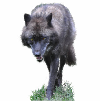 GRAY WOLF (sculpted) Wildlife Gift Statuette