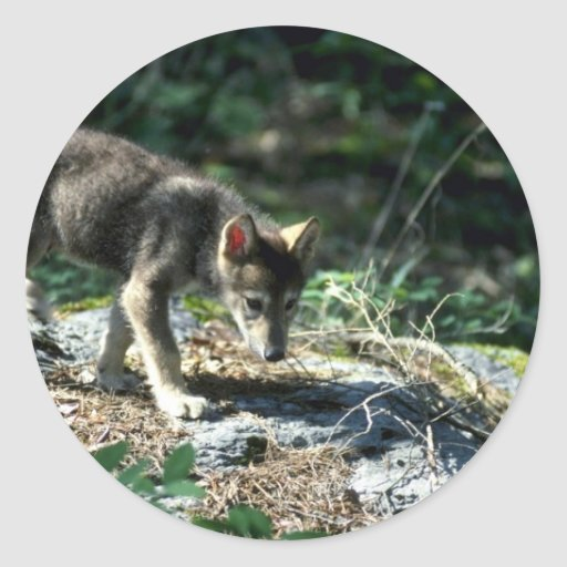 Gray Wolf-small pup in green woods Round Stickers
