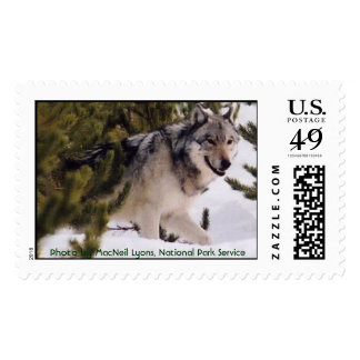 Gray Wolf Stamps