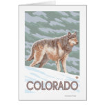 Gray Wolf StandingColorado Cards