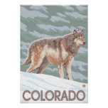 Gray Wolf StandingColorado Print