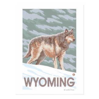 Gray Wolf StandingWyoming Postcard