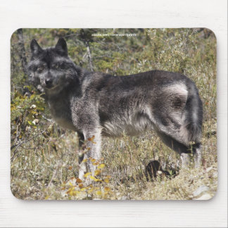 Gray Wolf Study Wildlife Supporter Mousepad