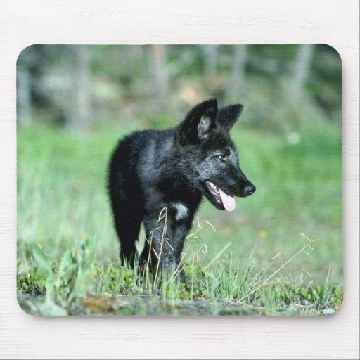 Gray Wolf-summer-(black-phase) cub Mousepad