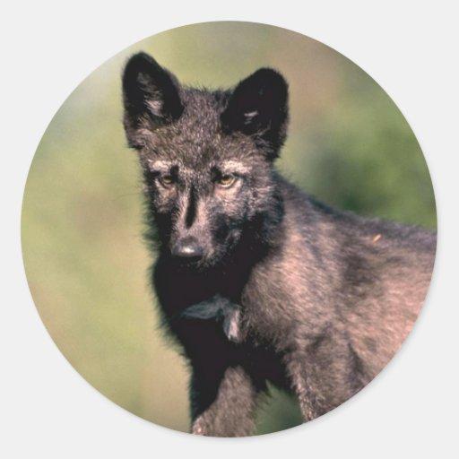 Gray Wolf-summer-(black-phase) cub Sticker