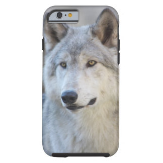 Gray Wolf Tough iPhone 6 Case